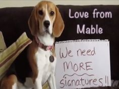Petition Update · A message from Mabel the beagle. · 500,000 people have signed so far. Please keep signing and sharing. Change.org