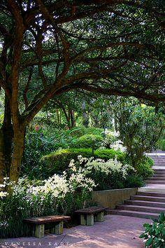 A quaint and shady corner at the Singapore Botanic Gardens.
