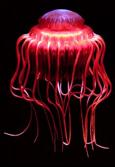 Atolla wyvillei, also known as Atolla jellyfish or Coronate medusa, is a species of deep-sea crown jellyfish (Scyphozoa: Coronatae). It lives in oceans around the world.