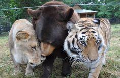 Das einzige Haus der Welt, an dem ein Bär, ein Löwe und ein Tiger freundschaftlich zusammenleben.