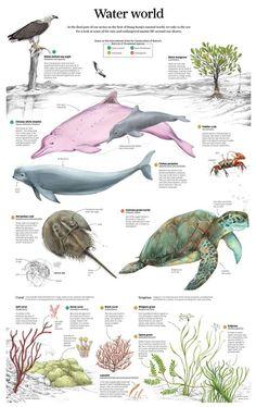 Image result for sea mammals