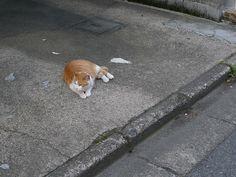 Wednesday : Shibuya Honmachi, via Flickr.