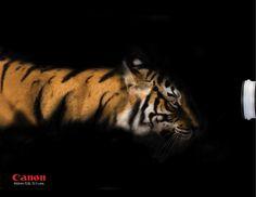 Canon: Tiger
