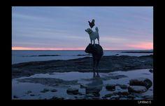 The Dog & Pony Show — Rob MacInnis