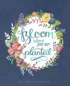 Don't wait for the conditions to be perfect; they never will be! Just BLOOM! 28.04.2016