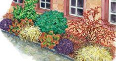 Häuser mit kahlen Fassaden und niedrigen Pflanzen drum herum wirken oft wie Fremdkörper. In unserem Beispiel bildet ein Beet mitKriechspindel, Johanniskraut und Zwergmispel eine harmonische Einheit mit der Hausmauer.