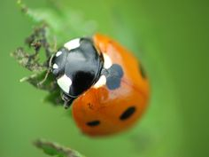 A ladybug up close and personal.