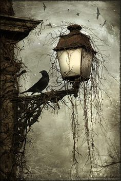 Crow on lamp post at night Dark creepy old London gothic feel. Love the hanging moss and carrion's circling in the back Arte Obscura, Arte Horror, Dark Art, Dark Gothic Art, Gothic Artwork, Gothic Fantasy Art, Oeuvre D'art, Cool Art, Graffiti