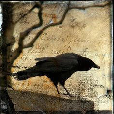 Crow  Crows are the keepers of the Sacred Law and to have a Crow totem is very powerful    Crow is an omen of Change.   Crow lives in the void and has no sense of time, therefore, it sees past, present and future simultaneously.