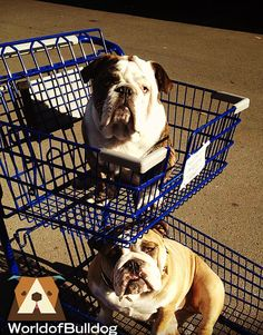 if I put my bulldog in a cart...it would tip over!!!
