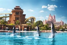 Dolphin Experience at Atlantis The Palm in Dubai. For this and more tours and activities visit us at: www. Honeymoon In Dubai, Honeymoon Style, Palms Hotel, W Hotel, Atlantis, Vietnam, Dubai Tour, Dubai Holidays, Destinations