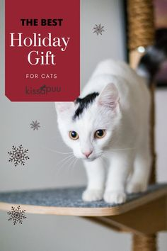 Purr-fect Holiday Gift idea for Cats! Visit our website to see the alternatives for cat tree: www.kissapuu.com #holidaygift #christmasgift #giftforcats #cattree Cat Christmas Ornaments, Christmas Cats, Gifts For Pet Lovers, Cat Gifts, Baby Kittens, Kittens Cutest, Wooden Cat Tree, Cat Presents, Cool Cat Trees