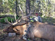 Huge elk - OUTDOORSMAN.com