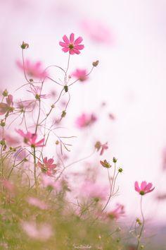 wild Flowers!