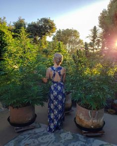 Sexing Cannabis: How to Tell the Difference Between Young Male vs Female Cannabis Plants ~ Homestead and Chill Organic Soil, Grow Organic, Organic Gardening, Gardening Tips, Marijuana Plants, Cannabis Plant, Cannabis Cultivation, Cannabis Seeds Online, Grow Bags