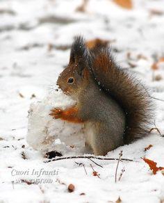 squirrel  winter
