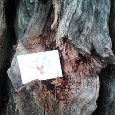 Poco fa ho lasciato la foglia gentile nel posto più bello che esista: il tronco di un albero.