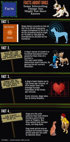 #Infographic: Some Interesting #Dog Facts.