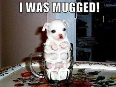 Attack Of The Funny Animals - 35 Pics Cute Animal Memes, Funny Animal Quotes, Animal Jokes, Cute Funny Animals, Funny Animal Pictures, Cute Baby Animals, Funny Cute, Cute Pictures, Animal Pics