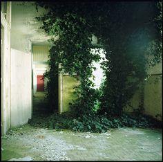 chlorophyll sanatorium, via Flickr.