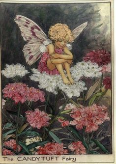 Cicely Mary Barker (1895-1973) Illustration of the CandyTuft Fairy for Flower Fairies of the Garden.