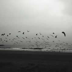A Flight at the Beach by OliviaInTheWild on Etsy