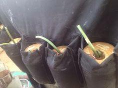 Police foil attack by two female suicide bombers in Borno