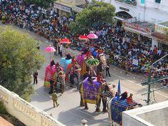 Photos of Dussehra Festival in India: Mysore Dussehra Elephants