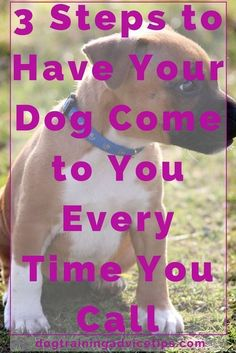 Are you doing some dog obedience training to fix your dog's behavior problems? If you are, then you must use hand signals in addition to verbal commands that Dog Commands Training, Basic Dog Training, Training Your Puppy, Training Dogs, Training Schedule, Training Online, Agility Training, Dog Agility, Potty Training