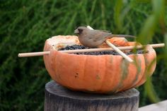 Create a bird feeder from your pumpkin in this easy DIY backyard project - the birds will love it and you'll get some extra use out of your pumpkin too!