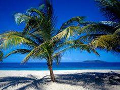 Mega palmera en la playa