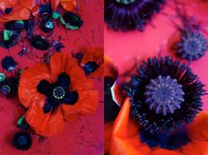 Poppies with Dietlind Wolf - a propstylist, photographer, illustrator and designer