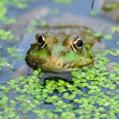 Taken in Lingfield, Surrey. 23 Breathtaking Photos Of British Wildlife