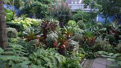 garden - tropical