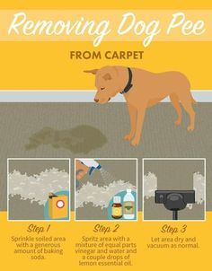 Removing Dog Pee from Carpet - Tap the pin for the most adorable pawtastic fur baby apparel! You'll love the dog clothes and cat clothes!