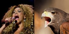 Beyoncé: A Fierce Falcon | If Pop Stars Were Birds, These Are The Birds They'dBe