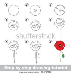 Step by step drawing tutorial. Vector kid game. How to draw a Poppy - stock vector