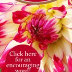 On Blooming Where You're Planted: An Encouraging Word | By Jamie Rohrbaugh | FromHisPresence.com