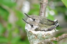 We ♥ hummingbirds! Have you seen our new video? birdsandblooms.com