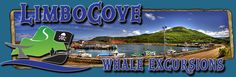 Pleasant Bay Whale Watching Cabot Trail, Whale Watching, Tours, Adventure, Adventure Movies, Adventure Books