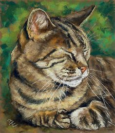 pastel animal drawings | Original Belinda Elliott Pastel Animal Drawing Painting of A Tabby Cat ...