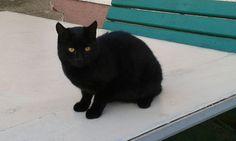 Czarne kocisko.