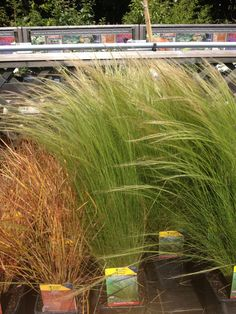 Decorative grass 2