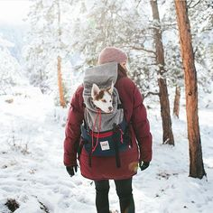 Sleepy pup taking a break! PC: in Northern Colorado by tentree Mans Best Friend, Girls Best Friend, Wanderlust, Hiking Dogs, Family Outing, Winter Wonder, Outdoor Life, The Great Outdoors, Husky