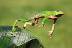 10 frogs you've never heard of