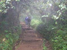 Misty paths of Kilimanjaro.