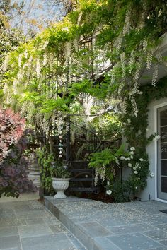 A mature wisteria (Wisteria sp) grows around a spiral wrought iron staircase, framing the entrance from the side yard into the backyard. /Tropical Patio by Margot Hartford Photography
