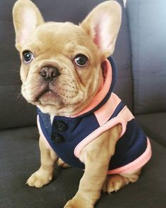 Top 5 Cutest Puppies Name with Photo