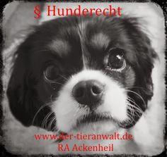 Anwalt für Tierrecht   Die Tierrechtskanzlei Ackenheil - bundesweite Rechtsberatung – Google+ http://www.der-tieranwalt.de #dogs #hund #welpen #puppies