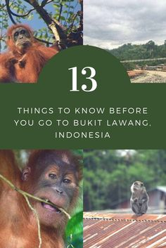 13 Things to Know Before You Go to Bukit Lawang, Indonesia: Travel Tips Southeast Asia Indonesia Backpacking and Jungle Trek